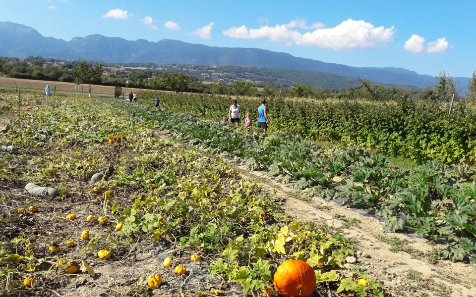 People are picking their own raspberries, pumpkins, zucchini