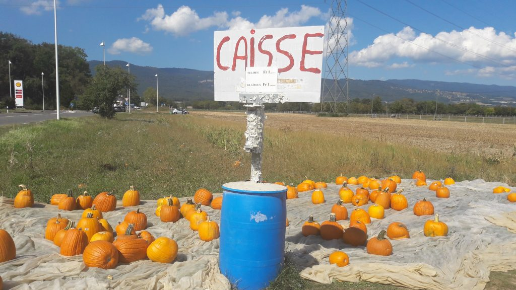 Pumpkins by the road sold based on the honor system