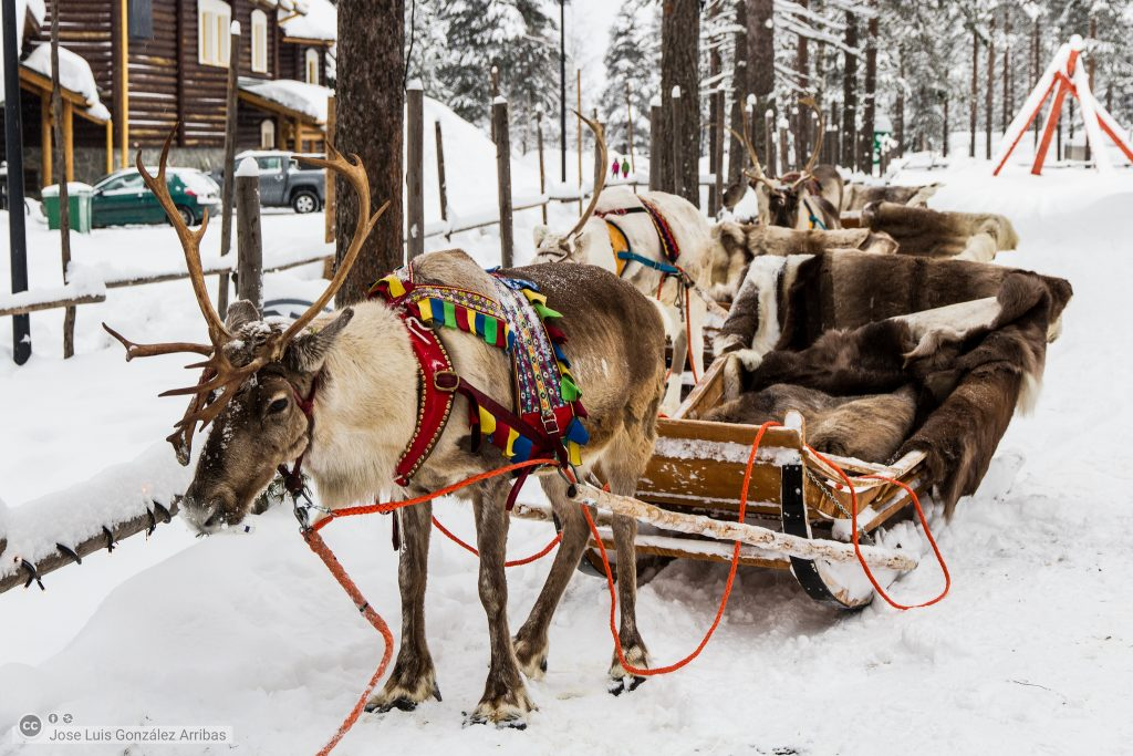 A reindeer with a sledge